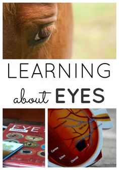learning about eyes collage Science Experiments For Preschoolers, Preschool Science Activities, Preschool Lessons, Lessons For Kids, Science Lessons, Teaching Science, Learning Activities, Preschool Activities, Teaching Kids