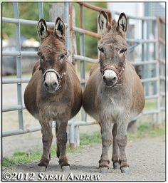 Festus and Eeyore | Sarah K. Andrew | Flickr