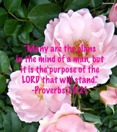 "Flowery Blessing: ""Many are the plans in the mind of a man, but it is the purpose of the LORD that will stand."" ~ PROVERBS 19:21(ESV)"
