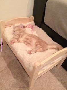 Someone from Alberta is cheating cat lovers by selling them shaved kittens. These shaved kittens were sold in the market as the hairless Sphynx cats. Cute Cats And Kittens, Cool Cats, Kittens Cutest, Cool Cat Beds, Funny Cats, Funny Animals, Cute Animals, Ikea Cat Bed, Diy Cat Bed