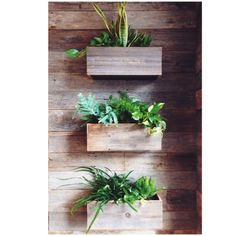 featherandarrow:  My favorite part of our Lush store, the self-watering plant wall! It's constructed from reclaimed wood from a barn in Port...