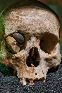 Archaeologists unearthed these Roman-era skulls near the Liverpool Street Station. Buried around 1,900 years ago, the skulls had washed into a river channel, where smooth stones lodged in an eye socket.
