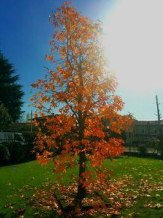 What a wonderful show, autumn!