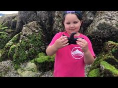 LIFE IN A TIDE POOL - WITH LINK TO TEACHING RESOURCES