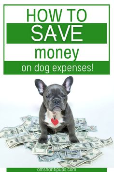 Pets bring so much joy and happiness into our lives, but that love comes at a cost! Read on for 5 easy ways to save money on your dog! Pet Care Tips, Dog Care, Dog House Kit, Dog Food Delivery, First Time Cat Owner, Tattoos For Dog Lovers, Living With Dogs, Puppy Pics, Cat Hacks