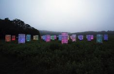 bruce munro: light at longwood gardens
