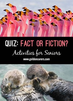 Fact or Fiction?: This is a fun and stimulating quiz debunking some long-held myths! Assisted Living Activities, Elderly Activities, Senior Activities, Physical Activities, Cognitive Activities, Alzheimers Activities, Spring Activities, Outdoor Activities, Trivia For Seniors
