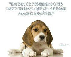 EU JÁ DESCOBRI E VC? ❤️❤️❤️ #amocachorro  #cachorro  #petmeupet  #gato  #amogato  #cachorroétudodebom  #gatos  #filhode4patas