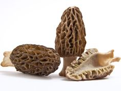 """""""The Sacred Mushroom"""" — Everything You Need to Know About Morels  