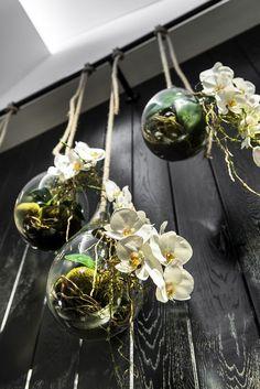 orquideas colgantes.