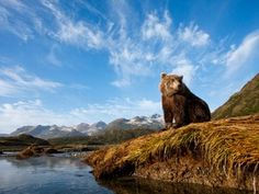 Denali National Park News, Photos and Videos - ABC News