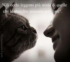 Gli occhi the eyes tell more stories of what ears can hear Kitten Love, I Love Cats, Animals And Pets, Funny Animals, Beastie Boys, Photo Quotes, Best Quotes, Cat Lovers, Dog Cat