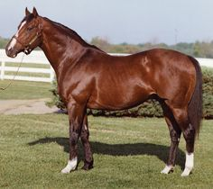 Storm Cat's grandsire, Northern Dancer. Though a scant 15.2 hands, he became perhaps the single most important stallion in the 20th century. Tony Leonard photo.