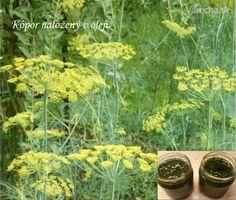 Parsley, Frozen, Herbs, Homemade, Plants, Food, Home Made, Essen, Herb