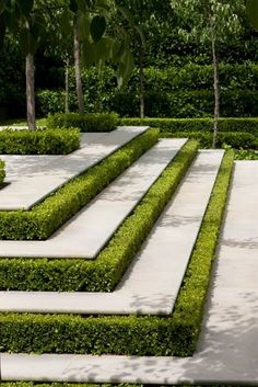 This will be used as a hardscape, with the boxwood hedges being used to accentuate the stepts to help tie in the boxwood fences in the garden to the patio in a more intimate way. Garden Steps, Garden Paths, Box Garden, Formal Gardens, Outdoor Gardens, Landscape Architecture, Landscape Design, Architecture Design, Landscape Stairs