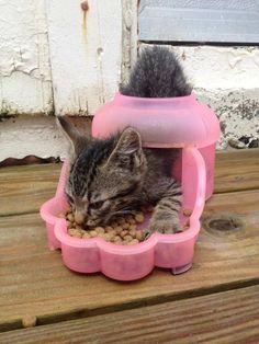 katzen, die fressen falsch machen