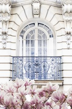 Magnolia Blossoms, Paris by Georgianna Lane
