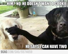 Humor | Funny | Dogs