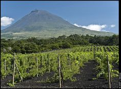 Landscape of the Pico Island Vineyard Culture, Portugal Portugal, Ellis Island, Out To Sea, The Beautiful Country, Archipelago, Wine Country, Vineyard, Places To Go, Tourism