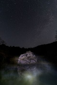 Kagami sakura tree at night, Fukushima, Japan