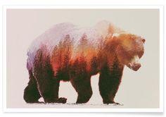 Brown Bear als Premium Poster