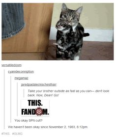 How sad is it that as soon as I saw the cats my brain went straight to this SPN scene without seeing the comments?