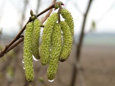 •(★)• Spring Images, Spring Pictures, Welcome Spring, Spring Sign, First Day Of Spring, Spring Is Here, Spring Green, Spring Colors, March Colors