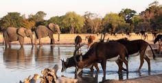 Little Makalolo Log Pile Hide Herd Of Elephants, Zimbabwe, Logs, Best Games, Wilderness, Safari, National Parks, Africa, In This Moment