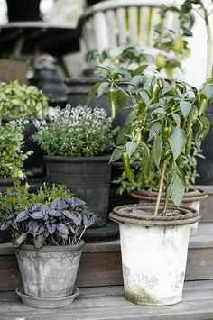 Container Garden Edibles: Herbs   jardin d'herbes aromatiques