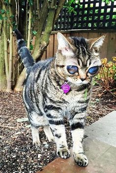 Matilda the alien cat is a perfectly normal feline with one notable exception: her enormous eyes.