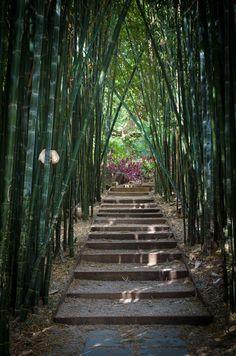 The Bamboo Walk