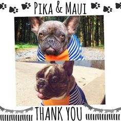 One day came to us the dramatic story of Pika. No doubt we were madly in love with her. Its history shelter and wonderful adoptive mother our sweet Liesl. Tuscany was too far to go hold her and play with her but we found other way to love. Get $ 500 for medical treatment. A few days later and of the hand of Lavinia arrived Maui. Unlike Pika if he had a home he was loved and protected but arrived a lymphoma and transformed his life and the of Lorene his human mommy. Is impossible to say no to…
