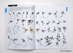 Chinese Painting Book Learn to Paint Orchid Chrysanthemum Birds Flowers New Art… Chinese Painting Flowers, Japanese Painting, Chrysanthemum, Sumi E Painting, Asian Flowers, Chinese Patterns, Leaf Drawing, Chinese Art, Chinese Brush