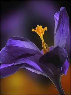 Gorgeous #flowers #photography #purple