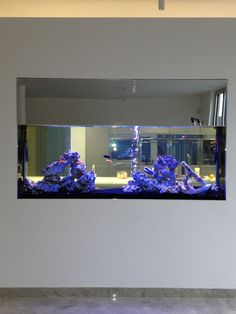 Aquatic Gems Ltd designed and installed this stunning Malawi Cichlid aquarium. It provides a focal point for an open plan kitchen in Hertfordshire.  www.aquaticgems.co.uk