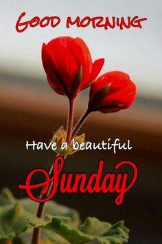 Happy Sunday Photos, Sunday Morning Wishes, Morning Images In Hindi, Good Morning Sunday Images, Good Morning Image Quotes, Good Morning Images Flowers, Good Morning Gif, Good Morning Picture, Sunday Gif