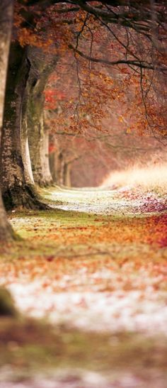 Magical Autumn Forest