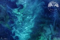 The waters off of the Alaskan coast usually come alive each spring with colorful swirls of phytoplankton.