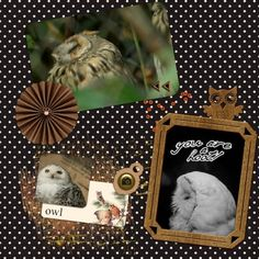 Owls, This digital scrapbooking page was created using Cast A Spell by Elif at Pixel Scrapper