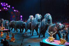 Ne pas hôte de cirque qui bat Prétendument et affame Animaux