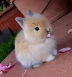 This cute fluffy bunny eating something. Is this bunnies food or not ? Please don't eat anything.