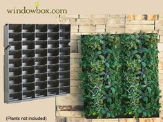 """Large Living Wall Planter - 20""""W x 20""""H - DIY Projects   Vertical Garden Kits - Living Wall Systems - Pots & Planters - Windowbox.com"""