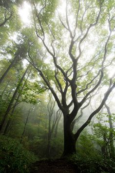 etherealvistas: Hula danseur de la forêt (Japon) par SYU * 2