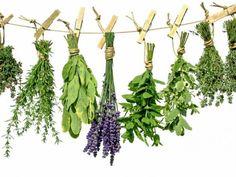 Mieszanki ziołowe wspomagające leczenie nowotworów i chroniące przed nowotworami.