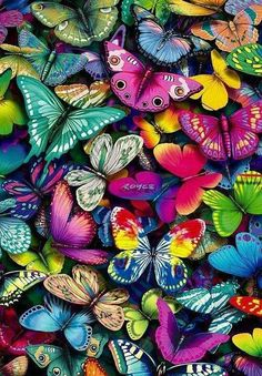 Butterflies, every time I see you they go crazy. I like to imagine they are excited because they know you have butterflies too.