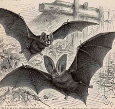 1889 bat scene original antique print for halloween fabulous scary bats. $45.00, via Etsy.