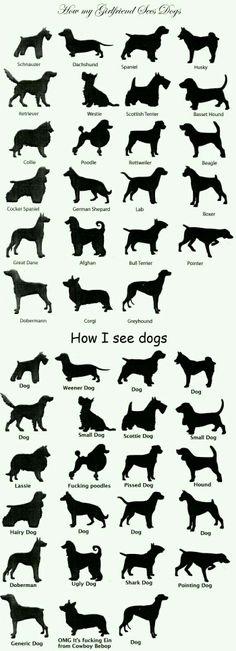 כלבלבים