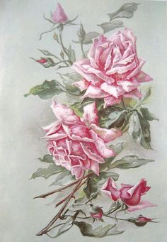 Print FREE SHIP Gorgeous Pink Cabbage Roses by VictorianRosePrints, $11.99