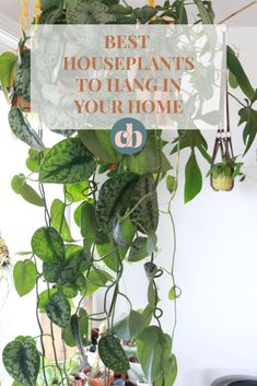 Are you looking to add some life to you home with plants? Look no further! These are the best houseplants to hang in your home! Plant Images, Plant Pictures, Perfect Plants, Cool Plants, House Plants Decor, Plant Decor, Hanging Plants, Indoor Plants, Indoor Gardening