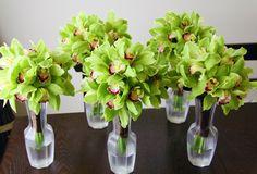 Green Cymbidium Orchids.
